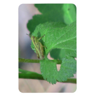 Hells Canyon Idaho Fauna Insects / Arachnids Vinyl Magnet