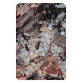 Hells Canyon Idaho Fauna Insects / Arachnids Vinyl Magnets