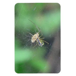 Hells Canyon Idaho Fauna Insects / Arachnids Rectangle Magnet