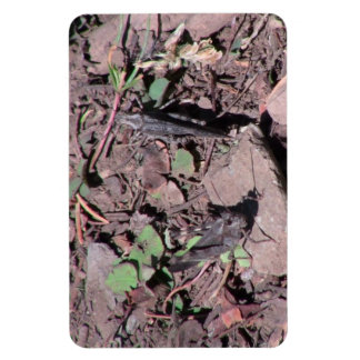 Hells Canyon Idaho Fauna Insects / Arachnids Magnets
