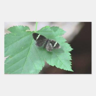 Hells Canyon Idaho Fauna Insects / Arachnids Rectangular Sticker