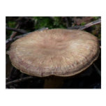 Hells Canyon Idaho Flora Fungi Lichen Mosses Postcard