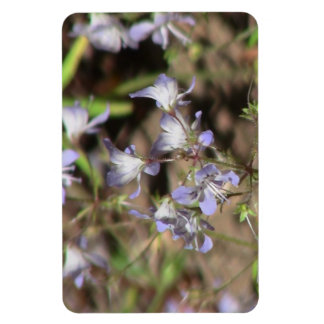 Hells Canyon Idaho Flora Wildflowers Flowers Magnet