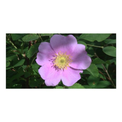 Hells Canyon Idaho Flora Wildflowers Flowers Customized Photo Card