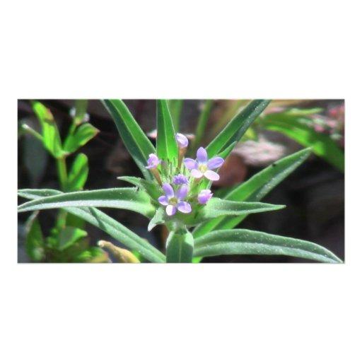 Hells Canyon Idaho Flora Wildflowers Flowers Photo Card Template