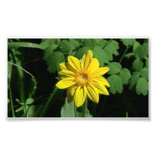 Hells Canyon Idaho Flora Wildflowers Flowers Photographic Print