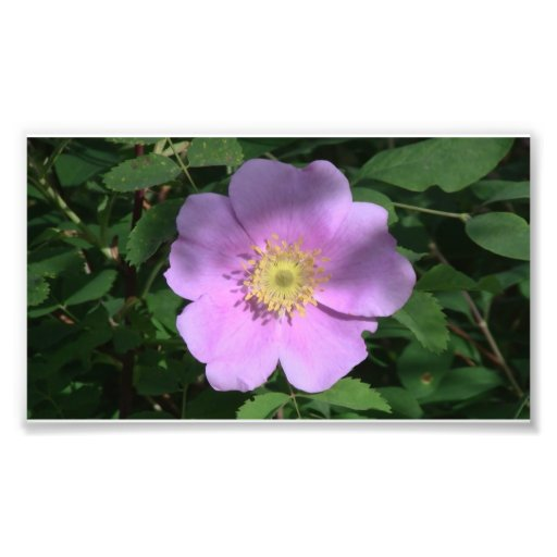 Hells Canyon Idaho Flora Wildflowers Flowers Photo Print