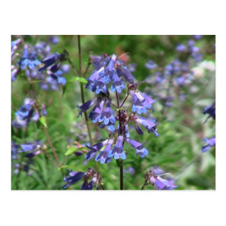Hells Canyon Idaho Flora Wildflowers Flowers Postcard