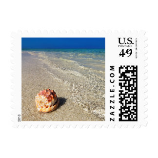 Helmet Shell In Tropical Lagoon| Cassis Rufa Stamp