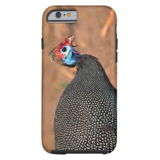 Helmeted Guinea Fowl (Numida meleagris). Africa, Tough iPhone 6 Case