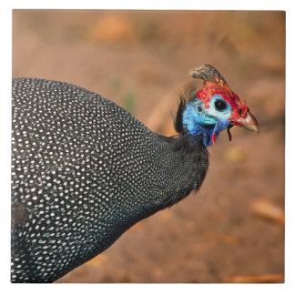 Helmeted Guinea Fowl (Numida meleagris). Africa, Ceramic Tile
