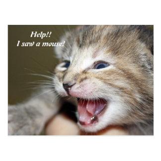 Help!!   I saw a mouse! Postcard