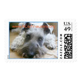 Help Schnauzer Rescue! www.NCschnauzers.org Postage Stamp