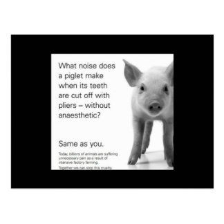 Help the Piglets! Postcard
