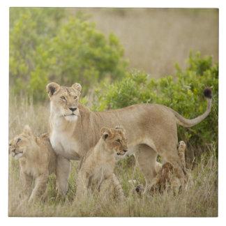 Hembra adulta del león africano con los cachorros, azulejo cuadrado grande
