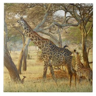 Hembra adulta y jirafa juvenil, Giraffa Tejas Ceramicas