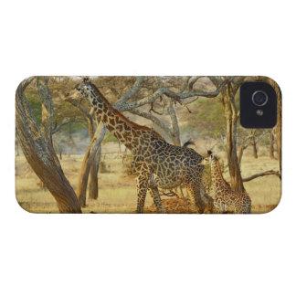 Hembra adulta y jirafa juvenil, Giraffa Case-Mate iPhone 4 Protectores