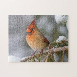 Hembra cardinal septentrional en árbol spruce en puzzles