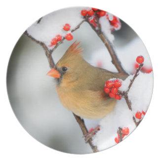 Hembra cardinal septentrional en Winterberry común Plato De Cena