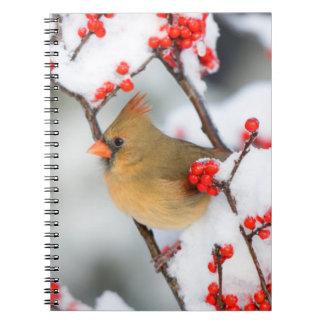 Hembra cardinal septentrional en Winterberry común Spiral Notebooks