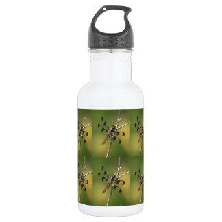 Hembra común de la libélula de la desnatadora del