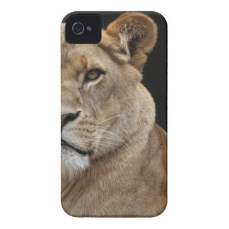 Hembra del león que se acuesta Case-Mate iPhone 4 protectores