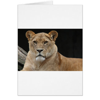 Hembra del león que se acuesta tarjeta de felicitación