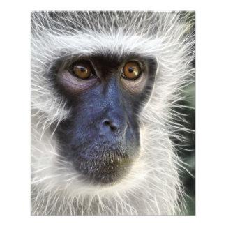 "hembra del mono del mono de vervet folleto 4.5"" x 5.6"""