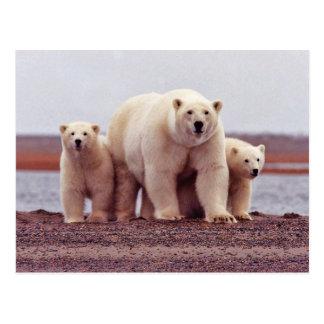 Hembra del oso polar con los jóvenes postales