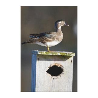 Hembra del pato de madera en nidal en humedal impresión en tela