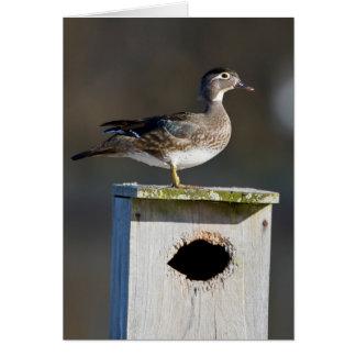 Hembra del pato de madera en nidal en humedal tarjeta de felicitación