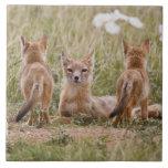 Hembra rápida del Fox (velox del Vulpes) con los j Azulejo Cuadrado Grande