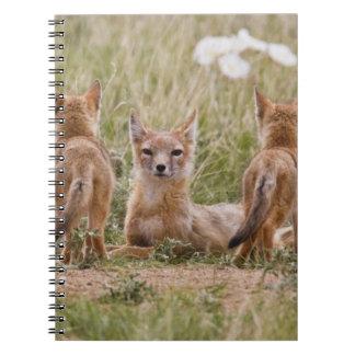 Hembra rápida del Fox (velox del Vulpes) con los j Spiral Notebook