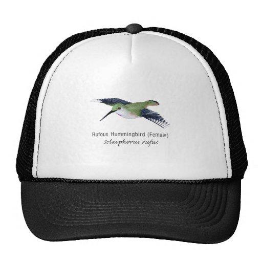 Hembra rufa del colibrí con nombre gorros