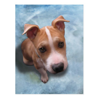 Hemi the Pit Bull Puppy Post Cards