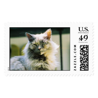 Hemingway cat 3 postage