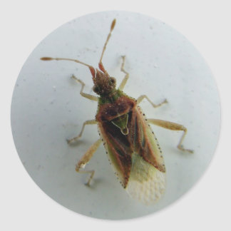 Hemiptera Classic Round Sticker