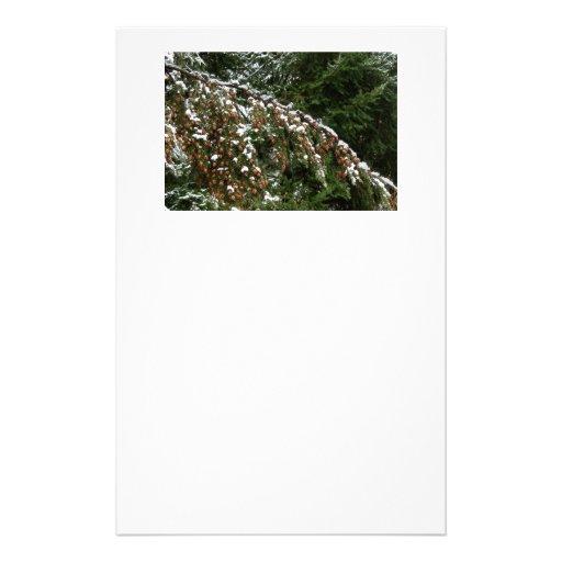 Hemlock con la nieve de la tierra baja - Olympia W Papeleria