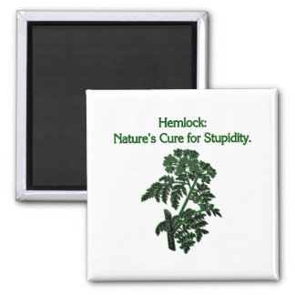 Hemlock: Cure For Stupidity 2 Inch Square Magnet
