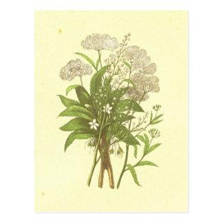 Hemlock, Mandrake & Wormwood Vintage Lithograph Postcard