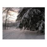 Hemlocks nevados tarjetas postales