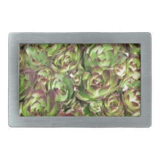 Hen and chicks (Crassulaceae) Belt Buckle