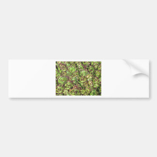 Hen and chicks (Crassulaceae) Bumper Sticker