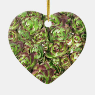 Hen and chicks (Crassulaceae) Ceramic Ornament