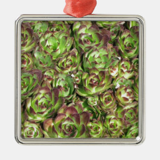 Hen and chicks (Crassulaceae) Metal Ornament