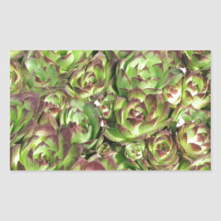 Hen and chicks (Crassulaceae) Rectangular Sticker