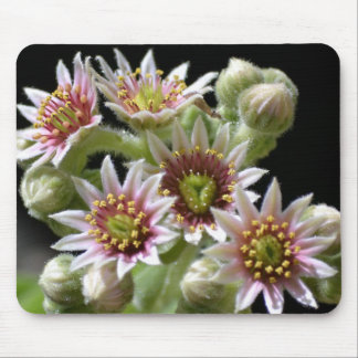 Hen and Chicks Flower Mouse Pad