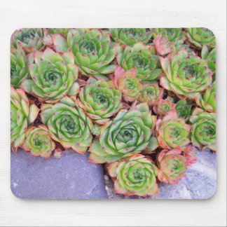 Hen and Chicks Mouse Pad