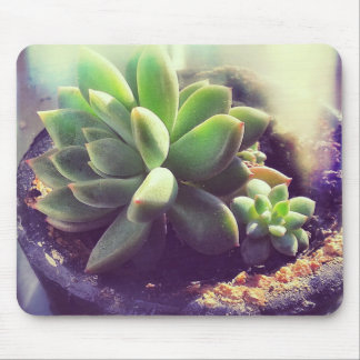 Hen and Chicks Plant Mouse Pad