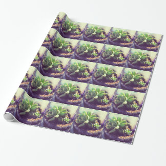 Hen and Chicks Plant Wrapping Paper